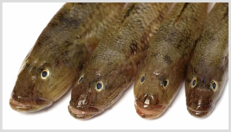 Bele-Fish_02