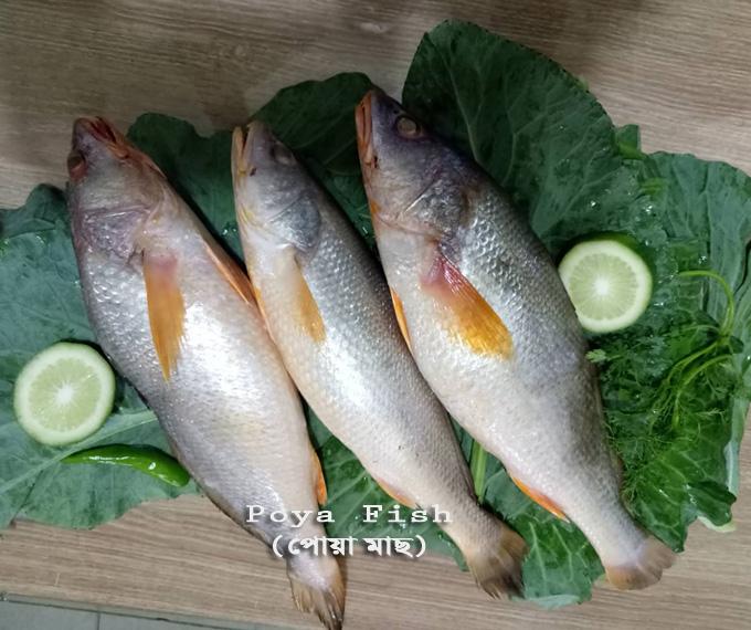 poya-fish