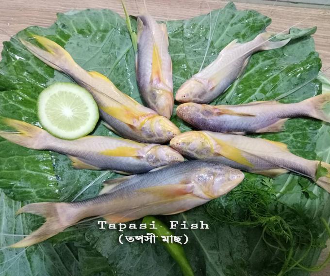 tapasi-fish