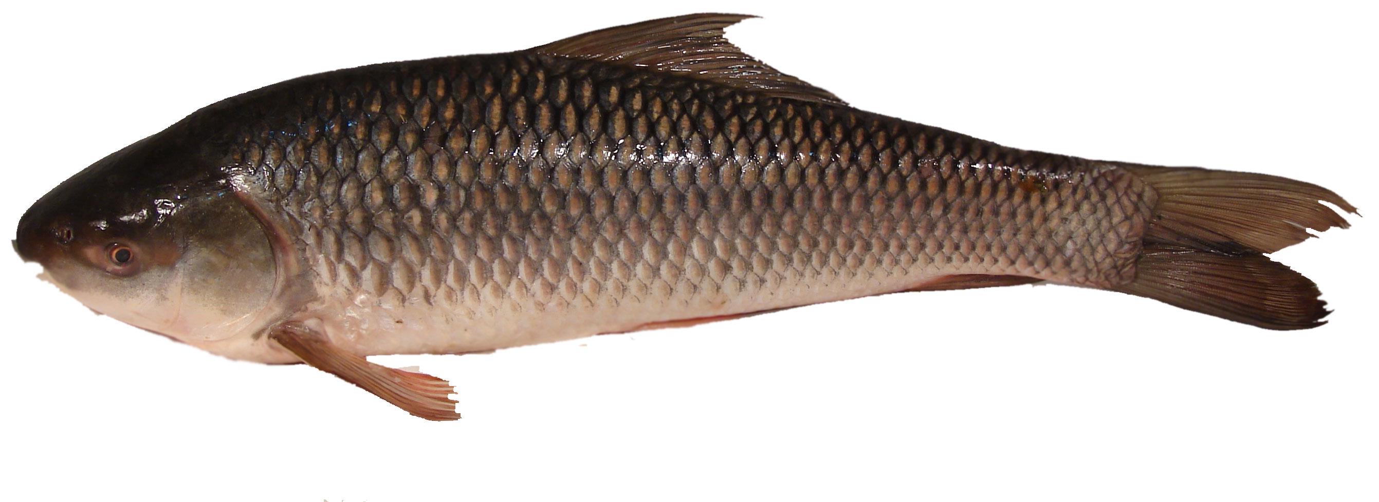 Rui-fish-1-kg